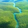 Dünyada balta girmemiş orman kaldı mı?