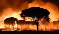 Anayasa ve Orman Kanunu Yanan Alanlar İçin Ne Diyor?