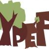Avrupa Ormanlarında Gençler yarışması başlıyor!