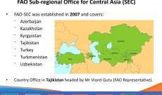 SEC COUNTRIES FORESTRY RELATED PROJECTS