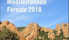 Özlem İRİTAŞ- Akdeniz Ormanlarının Durumu, 2018 Raporu iklim değişikliği ve su kaynaklarının etkisi konusunda Türkiye bölümüne katkı