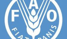 FAO-Yakındoğu Ormancılık ve Mera Komisyonu Toplantısı-25/29 Kasım 2019 Antalya