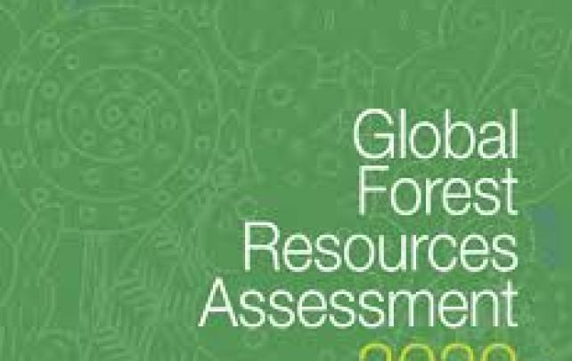 Global Forest Resources Assessment 2020- Küresel Orman Kaynakları Değerlendirmesi (FRA)